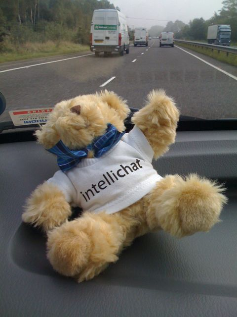 Intellibear travels